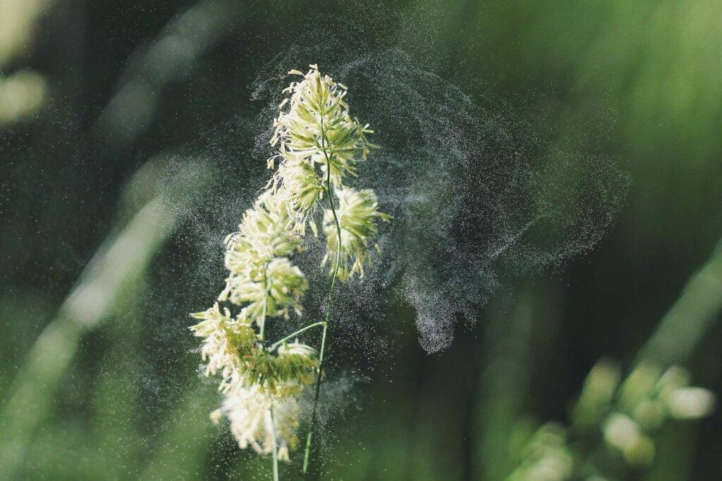 L'hypnose et les allergies